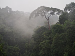 Cloud Forest at Kinguélé, Monts de Cristal, Gabon 29Sept14 Roy 02