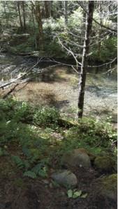 McKenzie Salmon Habitat