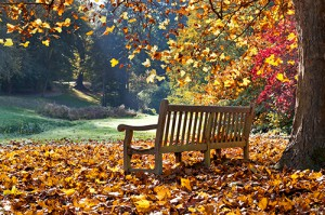 Bench under a tree in autumn
