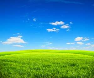 Green meadow under a  blue sky.