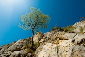 A lone tree grows in a rugged terrain.