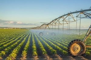 Photo of pivot irrigation system.