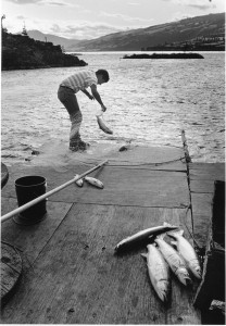 Roger Dick, Jr. harvesting blueback from scaffold off Highway 14 near Sauter's Beach; Lyle, Washington. [Jacqueline Moreau papers, Coll 459, Box 10, Folder 4; Special Collections and University Archives, University of Oregon Libraries, Eugene, Oregon.]