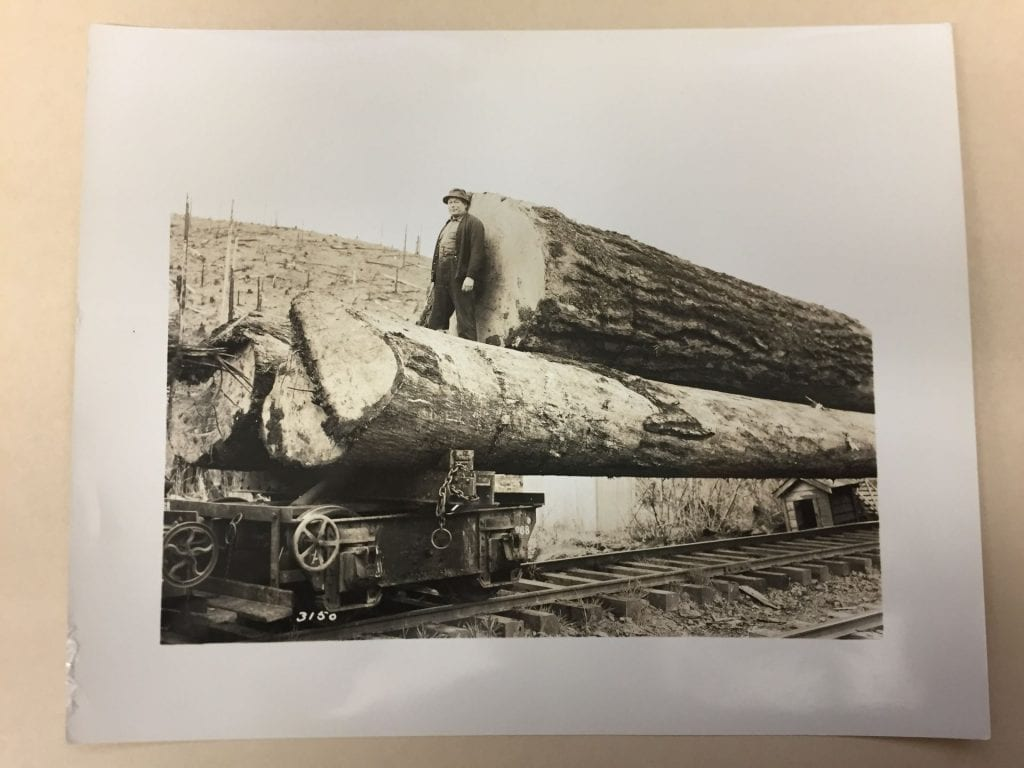 Man standing next to felled trees on railway