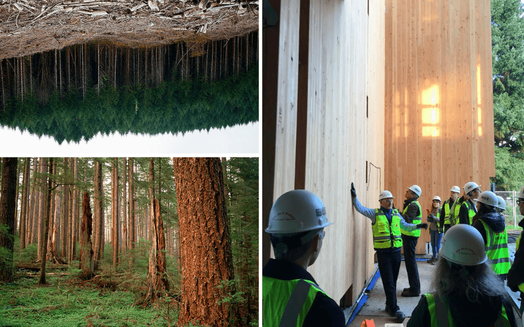 IHBE is awarded ARS grant to help designers better understand issues of carbon in forestry for more sustainable design planning