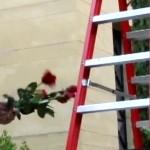 Applebaum: Concerto for Florist