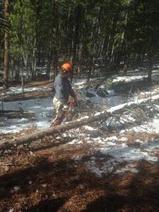 chainsaw certification