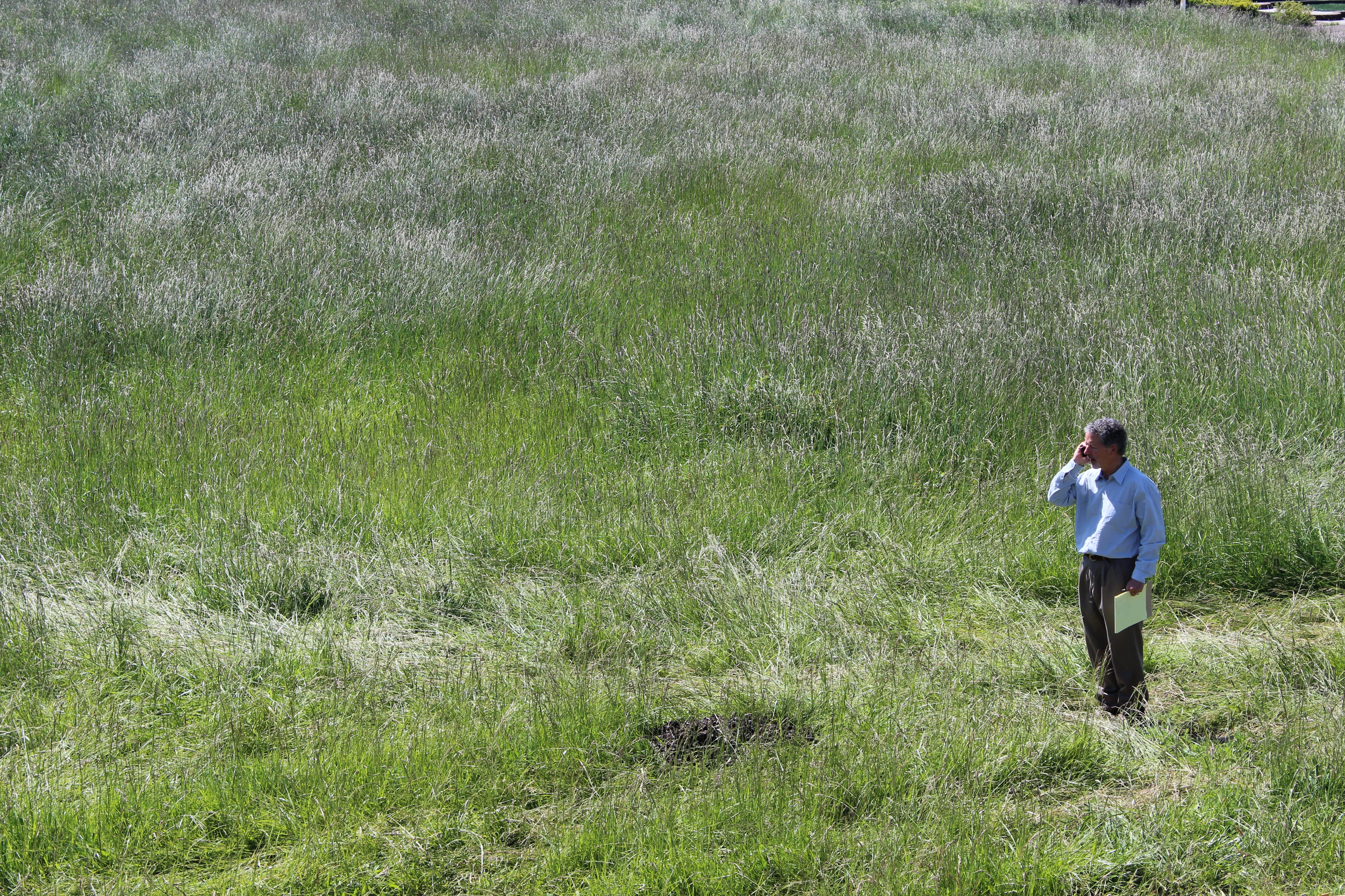 Our leader, Rob Thallon, in the neighboring field