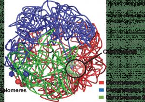 3D genome