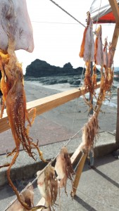5. Sun Dried Squid, Northern Honshu, Sea of Japan Coast, near Ajigasawa, Japan