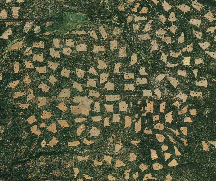 Simulating Patterns of Forest Management
