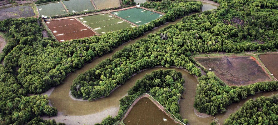 Modeling Forest Mangrove to Shrimp Farm Conversion in Thailand