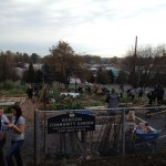 At Kenton Community Gardens