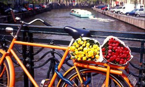Expedia: Tulips on Bicycle Above Canal