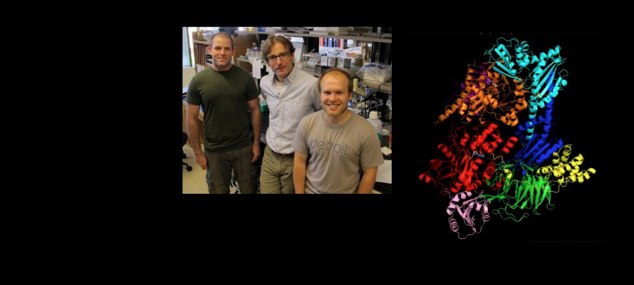 Nolen Lab - Oregon team charts new understanding of actin filament growth in cells