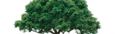 Data Trees - data list heirarchy