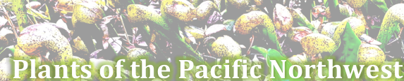 Popular plants of the Pacific Northwest