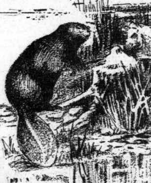 Oregon's First Resource Industry: Fur Trade and Beaver Ecology in