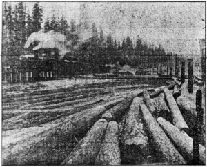 Photo of logs at the mill, with Douglas fir trees in the background
