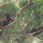 Bonobos relaxing2