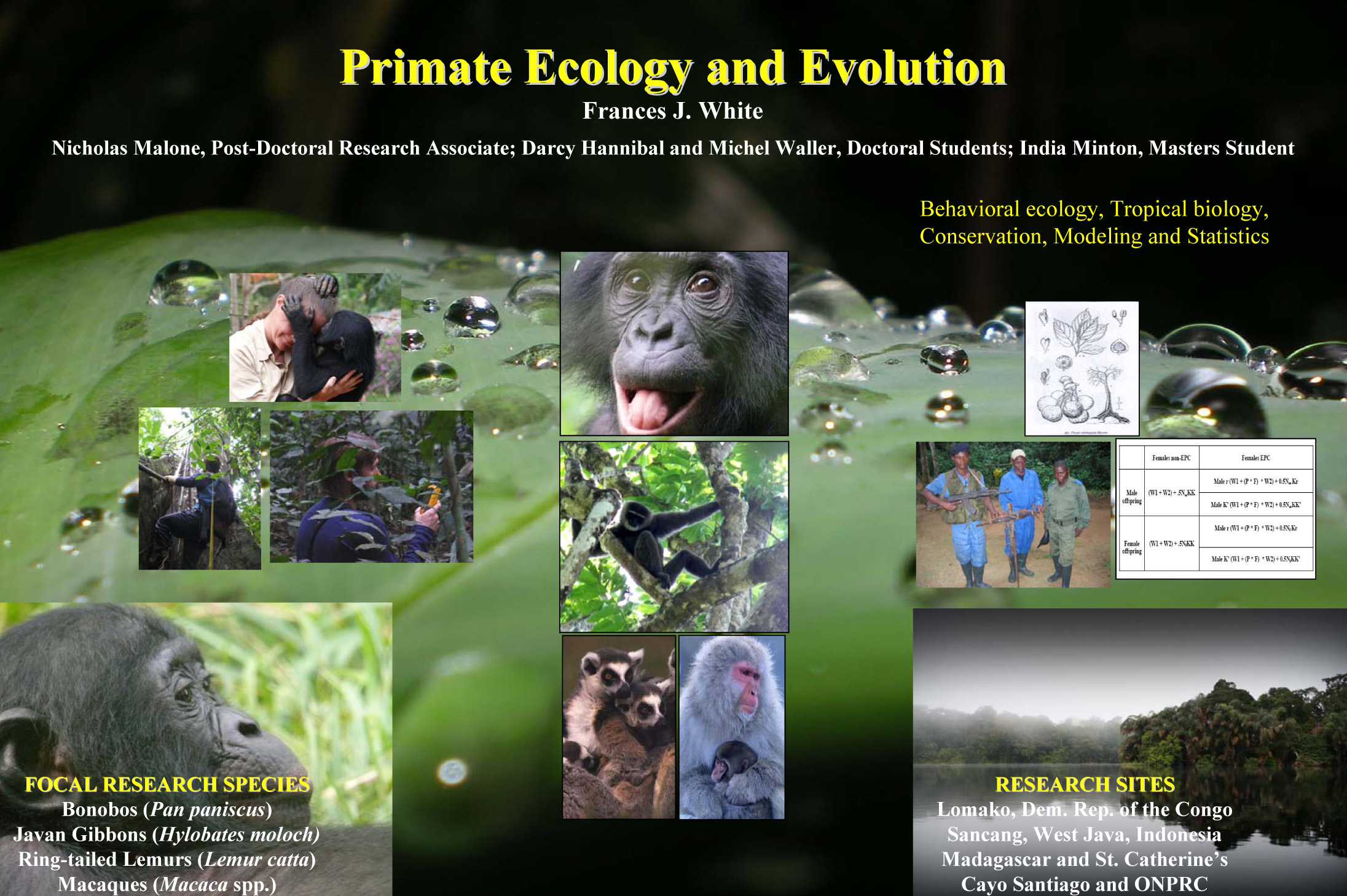 ecology and evolution Welcome to the sensory ecology and evolution group we study animal coloration and vision in a wide range of animals, including birds, reptiles, crabs, insects.