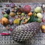 Lomako fruit