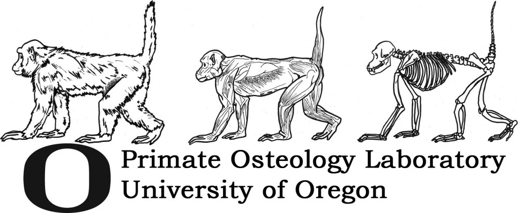 Primate Osteology Lab logo