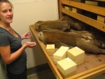 Graduate Student Monya Anderson at the Smithsonian Institute's Natural History Museum