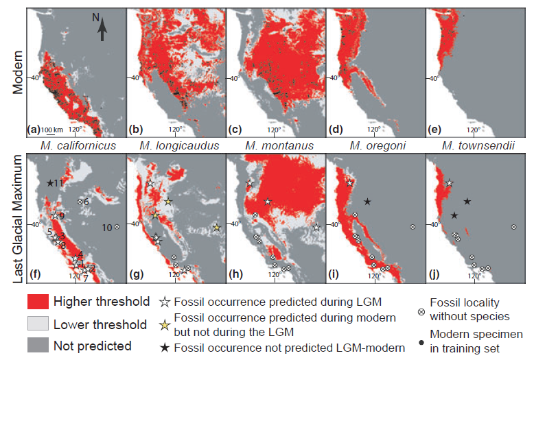 Maps of modern and Last Glacial Maximum range models for five species of voles