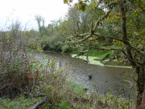 Historic meander of the Long Tom, now cut off