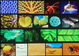 Michael Pawlyn Biomimicry 1