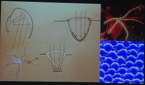 Michael Pawlyn Biomimicry 7