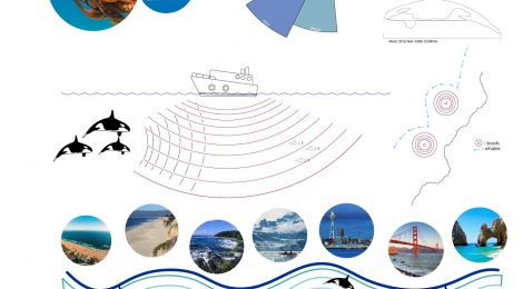 Chase Moore Whale Migration Ex 12 Design Communication Ii