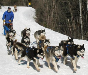 sled_dogs_race