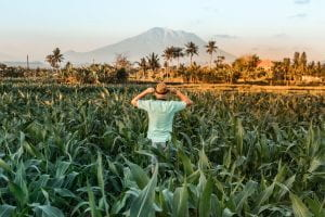 Man standing in sugarcane field