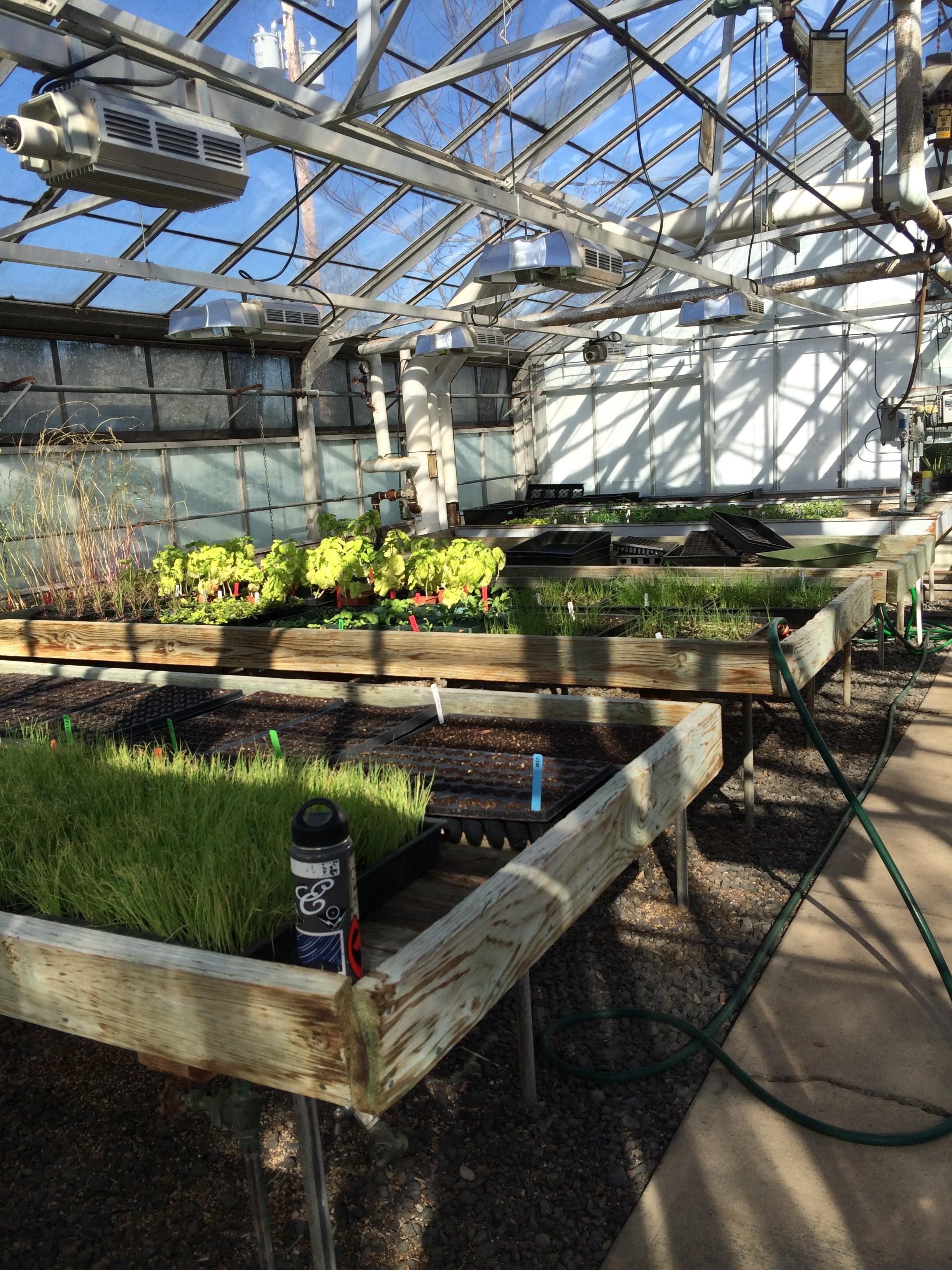 Community Food Security Fruit Trees Garden Updates