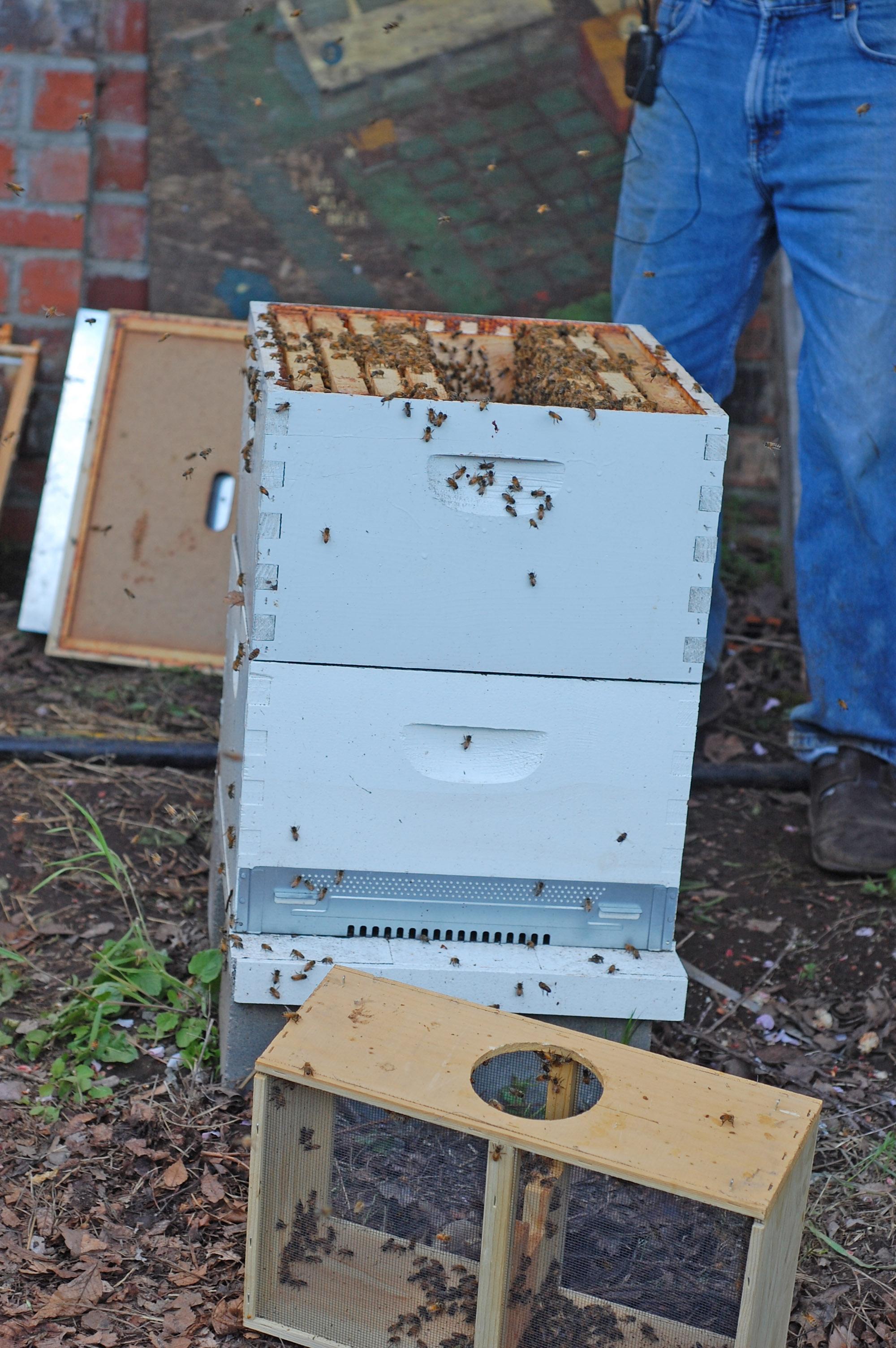 warre bee home