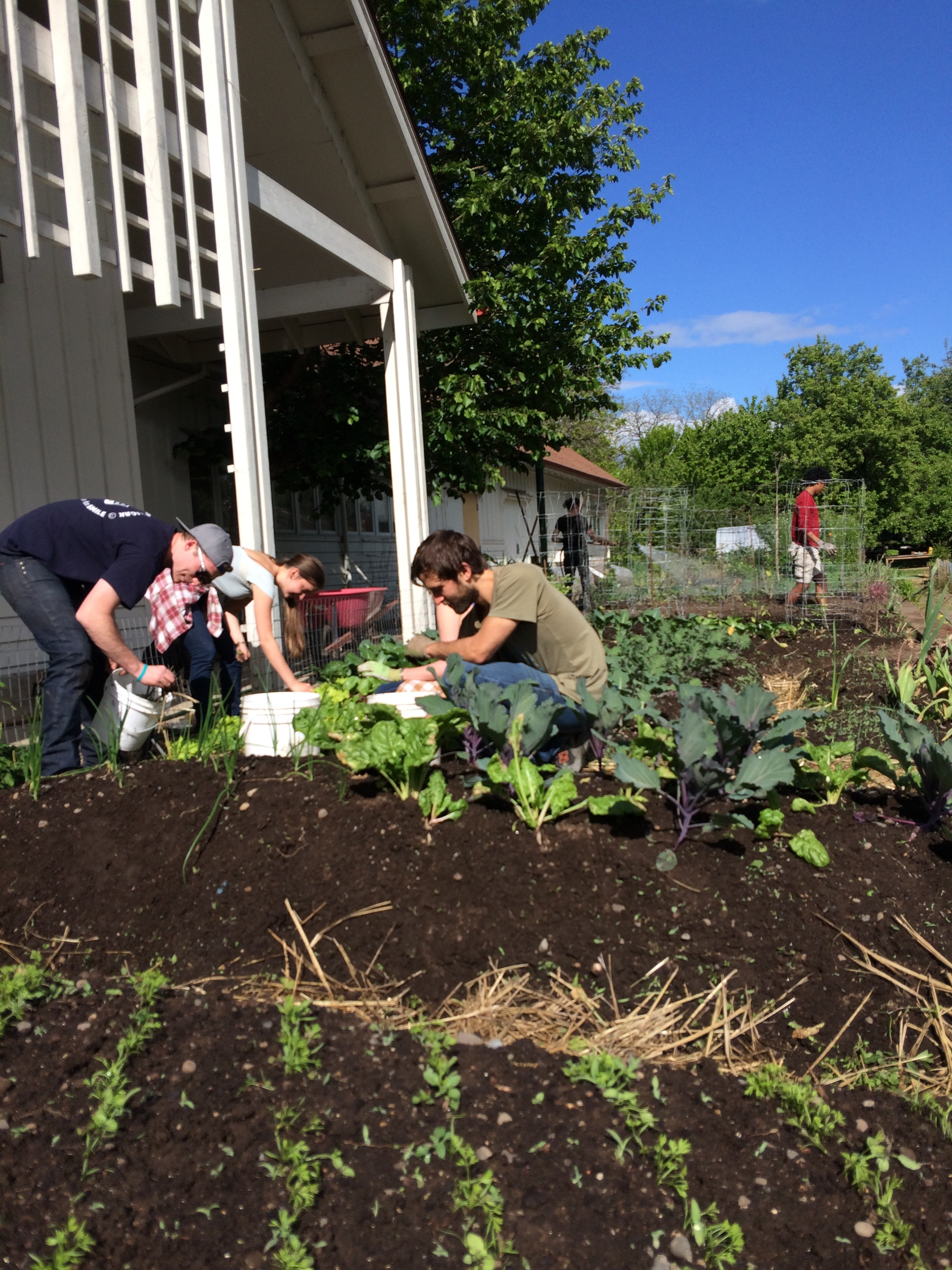 Fascinating A Narrative Of The University Of Oregon Urban Farm With Gorgeous Upper Terrace Matt May  With Comely Big Garden Also Olive Garden Williamsburg In Addition Kennedy Gardens Billingham And Garden Tea Party As Well As Lockable Garden Storage Box Additionally Keep Cats Out Of My Garden From Blogsuoregonedu With   Gorgeous A Narrative Of The University Of Oregon Urban Farm With Comely Upper Terrace Matt May  And Fascinating Big Garden Also Olive Garden Williamsburg In Addition Kennedy Gardens Billingham From Blogsuoregonedu
