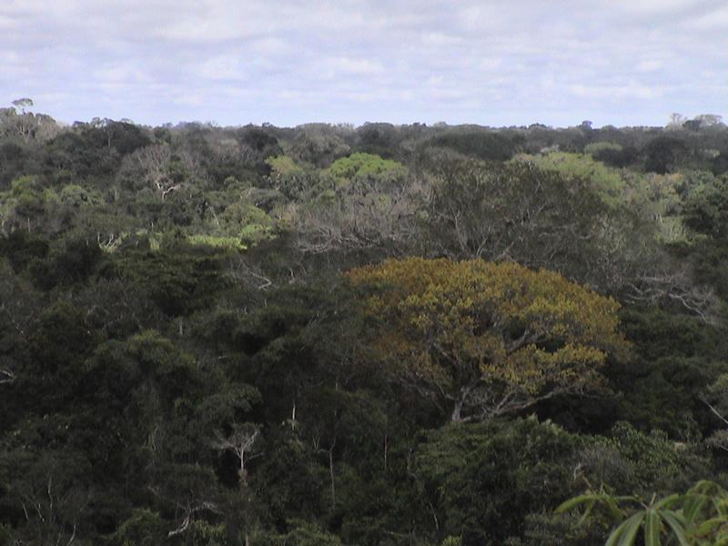 lowland rainforest