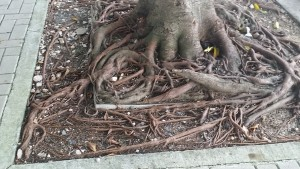 boxed_tree_roots (1)s