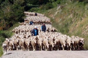 Shepards during the transhumance in Oncala, Soria Photo: C. Ortega (El Mundo)