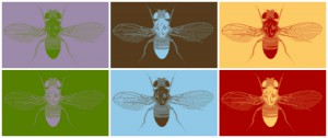 fruitfly aw collage