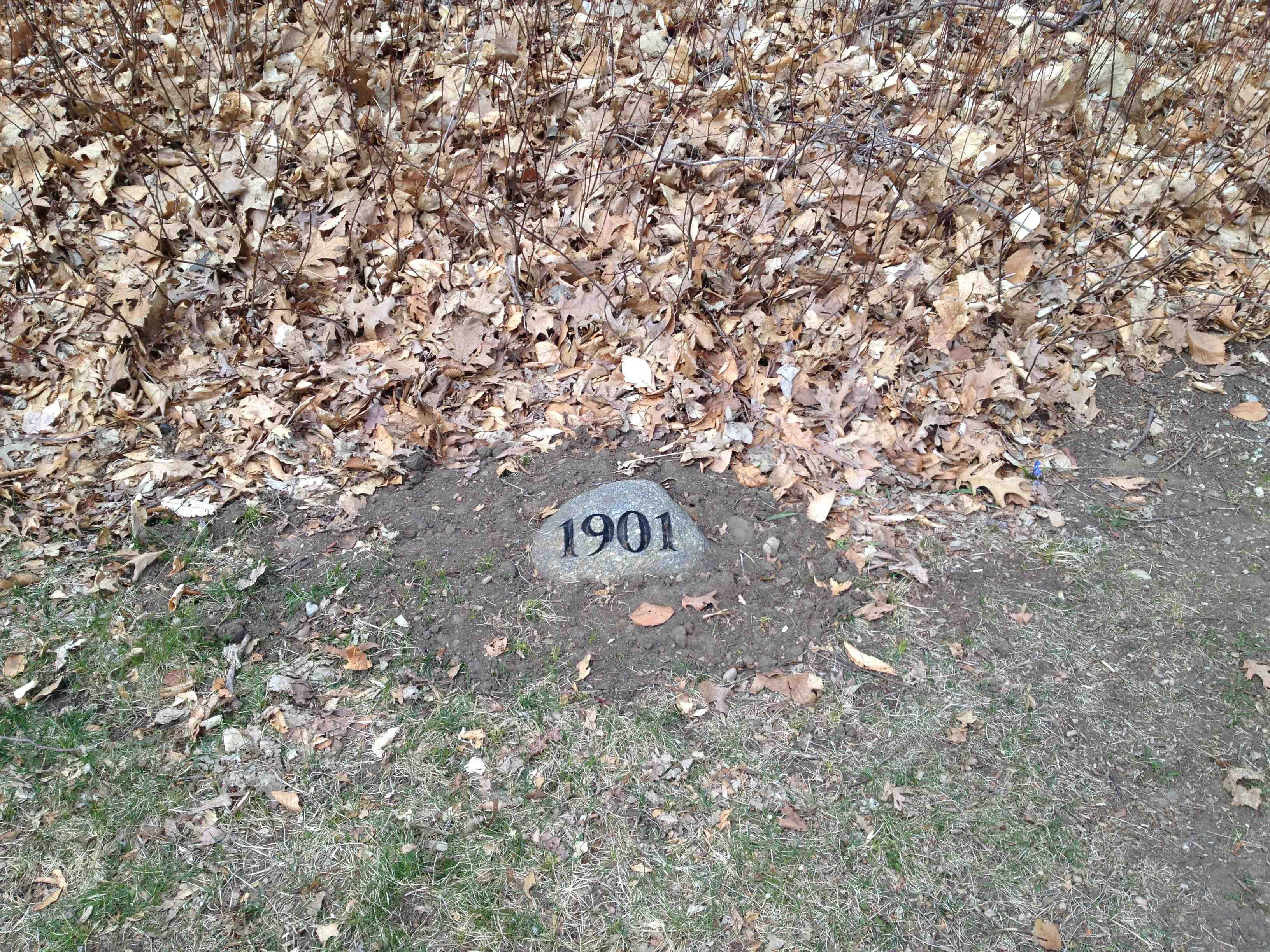 The base of the 1901 class tree! The tree is just behind the Tower Court dorm complex.