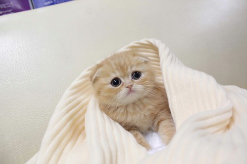 quarantined kitten