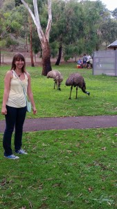 Emus in Warnambool