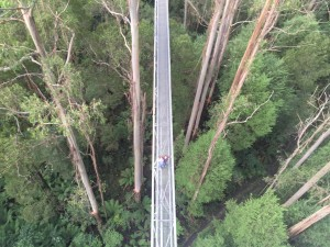 The canopy tour platform from the highest tower