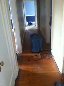 Who know we had hardwood beneath that carpet?