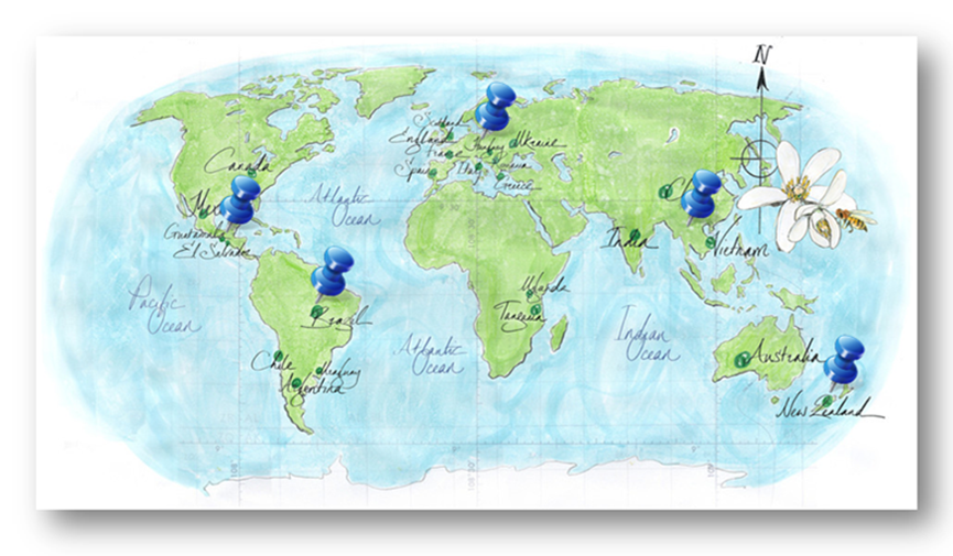 world map bees and pins ppt version