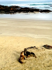 Crazy sea lions