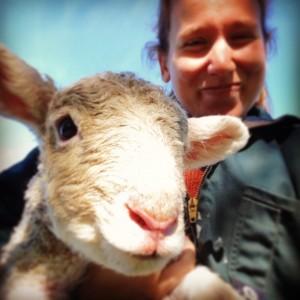 A happy lamb